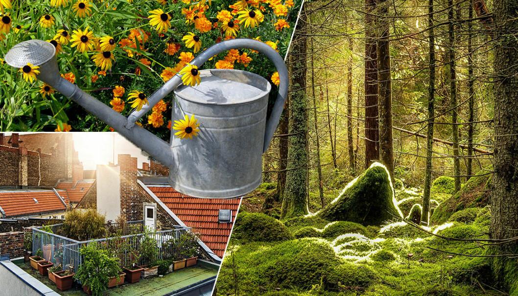 Trädgårdstrender 2019