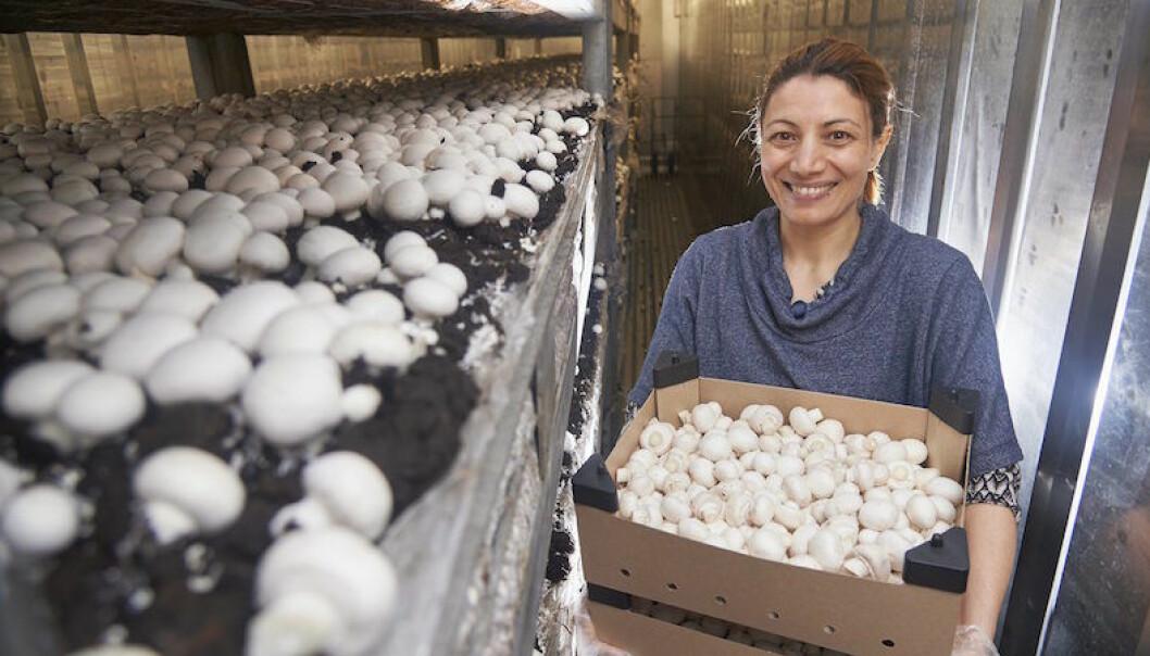 Eftermammaledigheten kom Ela inte in på arbetsmarknaden igen. Då började hon odla champinjoner.