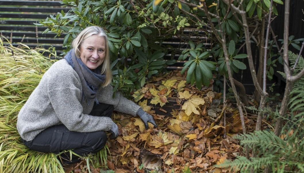 Anni Jähde bygger ett bo till trädgårdens igelkottar så att de klarar vintern.