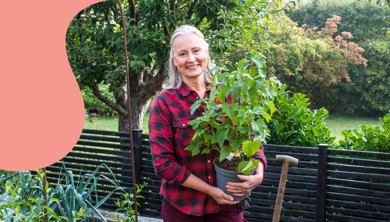 Anni Jähde med en bärbuske som hon här visar dig hur du planterar.
