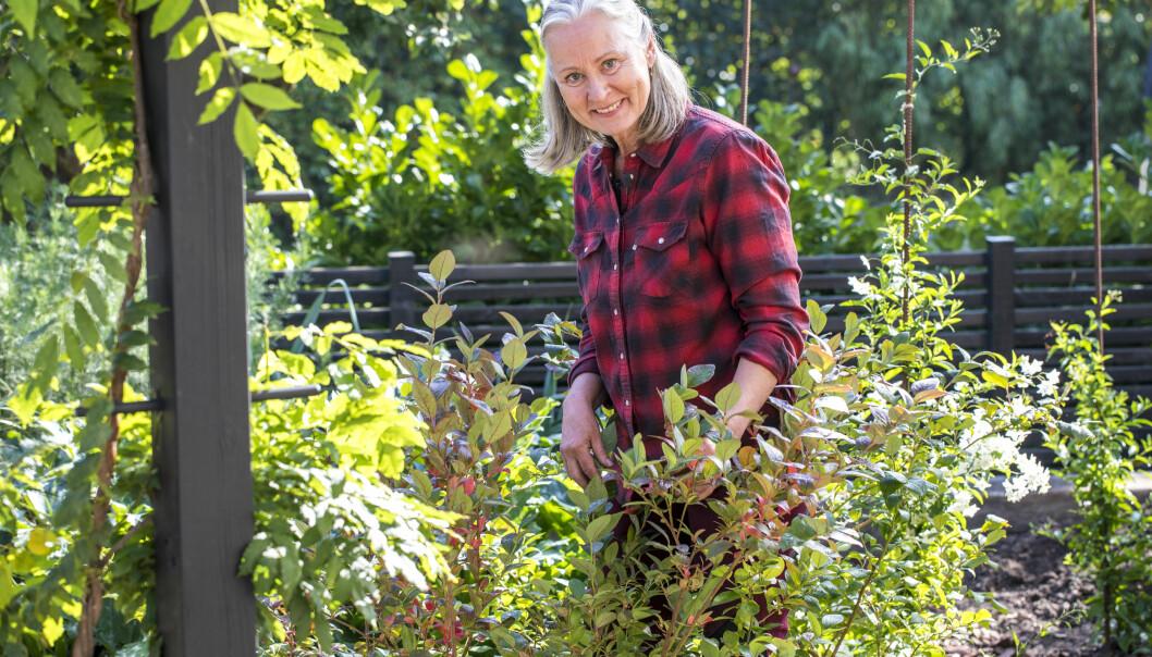 Anni Jähde med sina nyplanterade blåbärsbuskar.