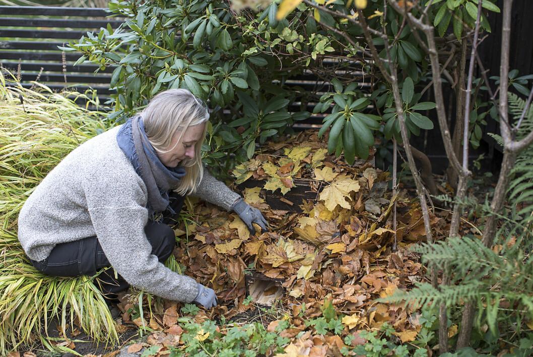 Välj en undanskymd, lugn plats i trädgården gärna – i ett buskage. Samla ihop en mängd löv och göm boet i lövhögen. Nu syns bara ingången, ett par granruskor kommer att dölja det för alla utom en bostadssökande igelkott.