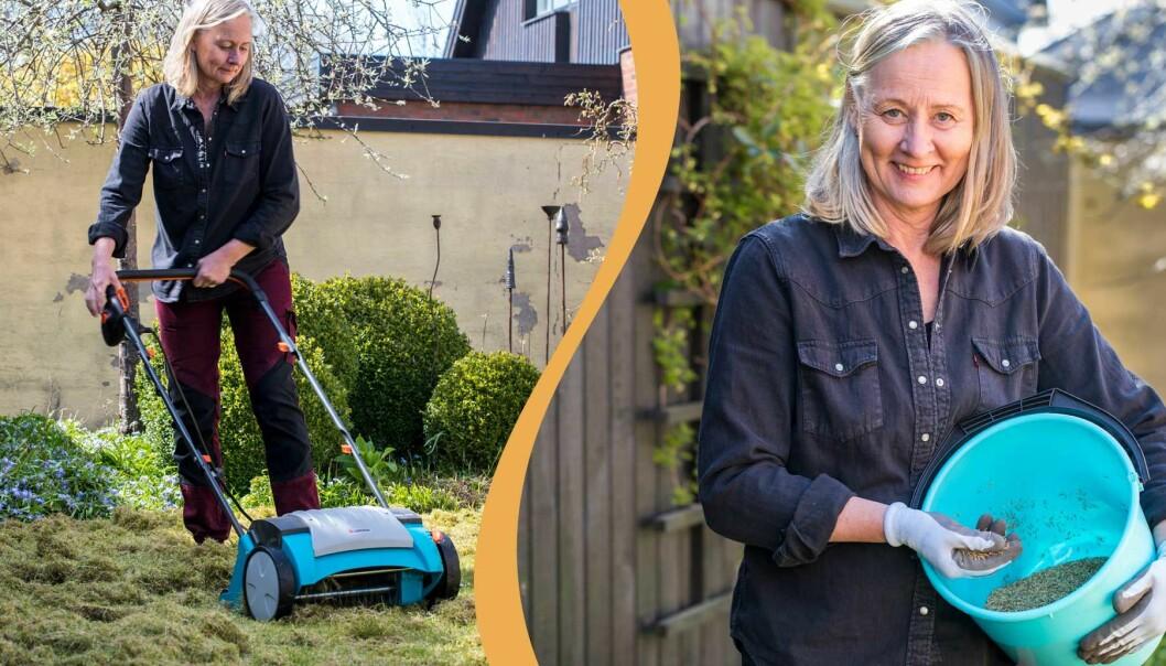 Anni Jähde visar hur du förbereder gräsmattan med att klippa och så den.