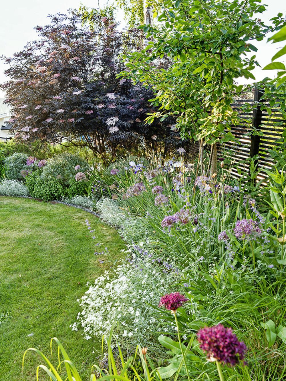 Rabatten vid gräsrundeln är  full av fantastiska allium 'Christophii' i månadsskiftet juni–juli. Kantväxt är silverarv.  Vinlöken har en underbar mörk färg. Dessutom  doftar den underbart.