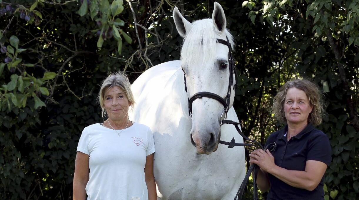 Ann-Sofi Berg och Barbro Wiengren står på var sin sida om hästen och överlevaren Kat's Hero.