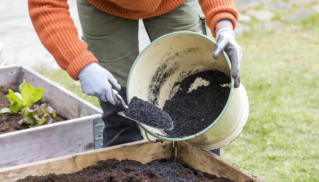 Biokål som ger jorden i pallkragen struktur och håller kvar fukten.
