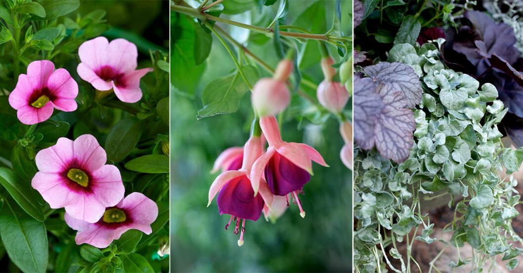 Tips på blommor till en skuggig balkong