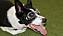 Ulla i sina specialgjorda hundglasögon. Det är från början hundsolglasögon som sedan fått anpassade linser med rätt styrka för hundens närsynthet.