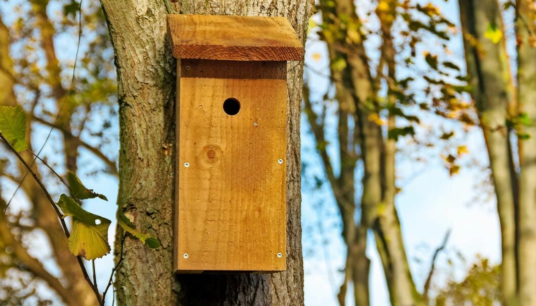 Fågelholk i träd
