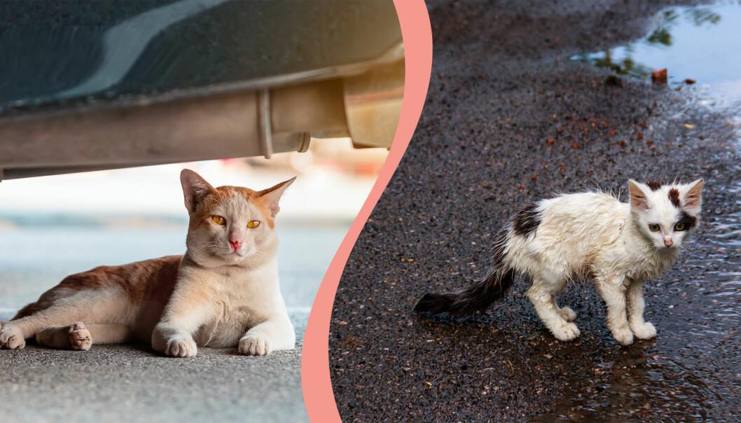Två hemlösa katter.
