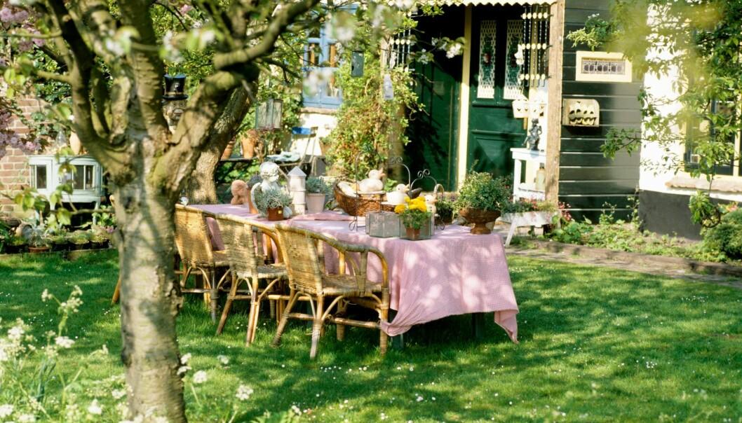 Ett uppdukat bord i trädgården i perioden maj - juni.