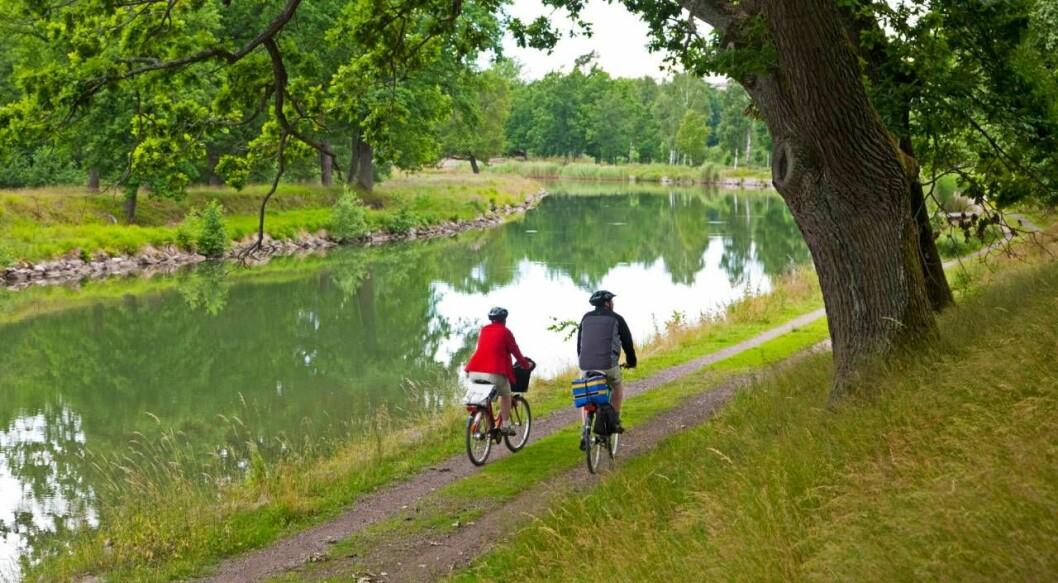 Par cyklar i grönskande miljö.