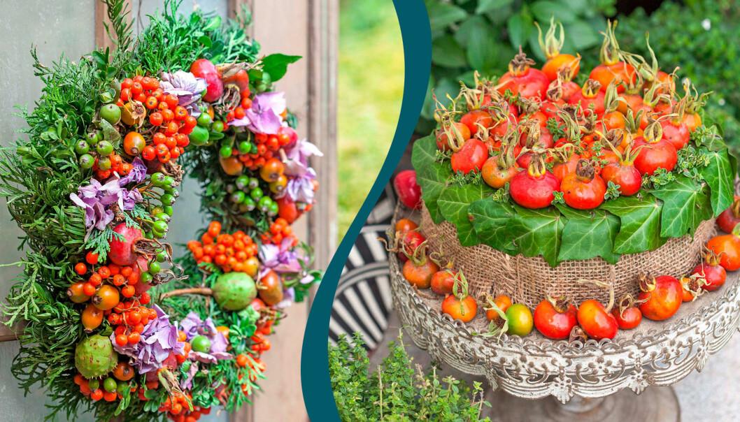 Delad bild. Till vänster: En vacker höstkrans med rönnbär och nypon. Till höger: Dekorativ nypontårta till entrén.