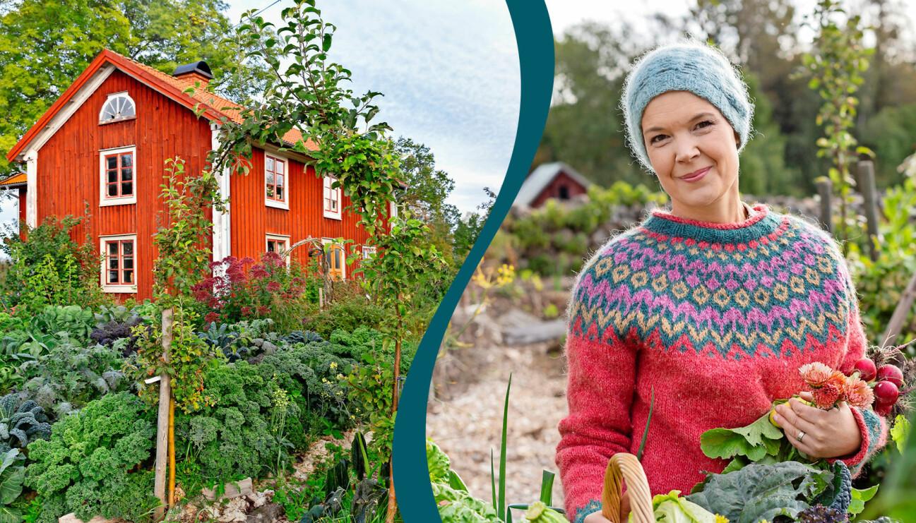 Delad bild. Till vänster: Sara Bäckmos hus och trädgårdsodling. Till höger: Sara Bäckmo med nyskördade grönsaker.