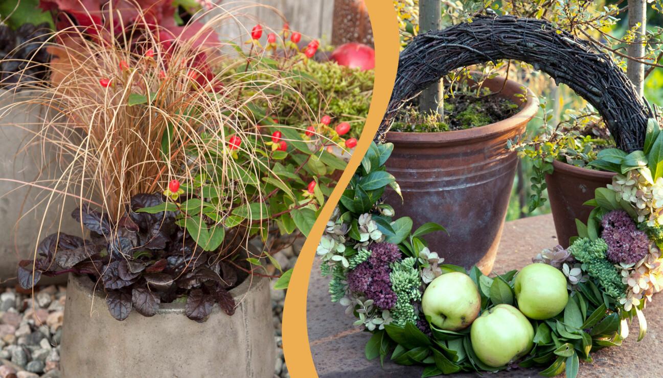 Delad bild. Till vänster: Vacker höstkrans med mörka toner. Till höger: Dörrkrans med äpplen.