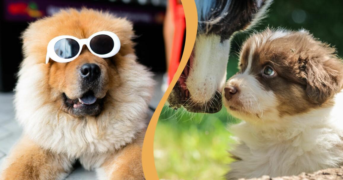 Det finns gott om populära hundar på instagram, de här två är inte några av dem.
