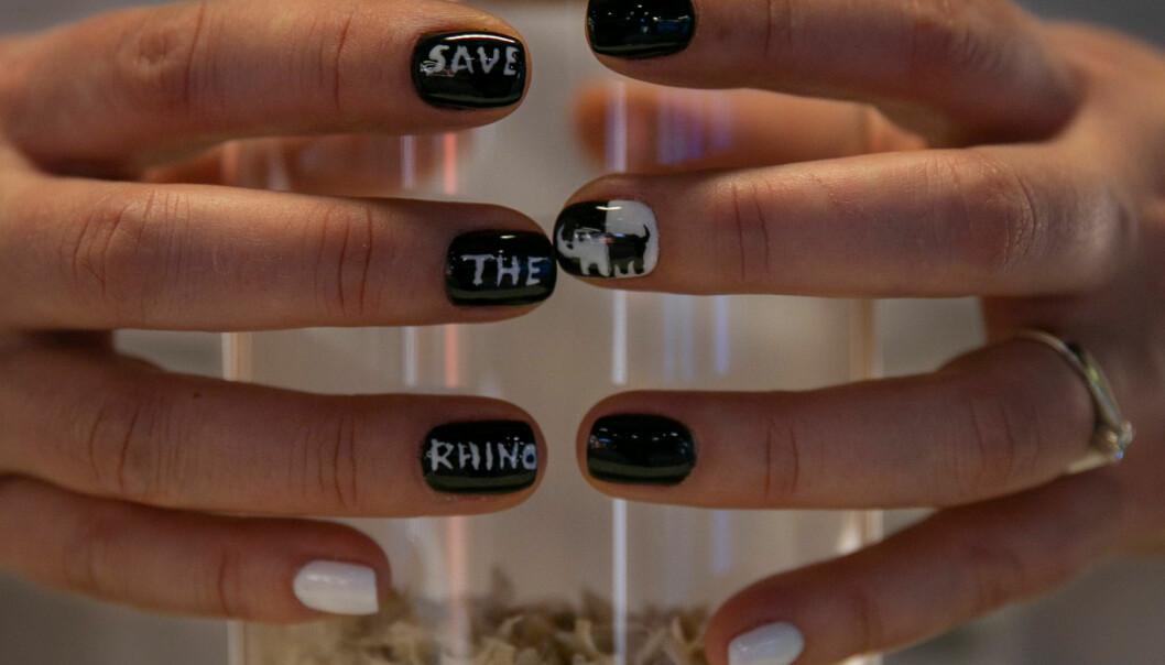 Naglar i burk för kampanj för noshörningar