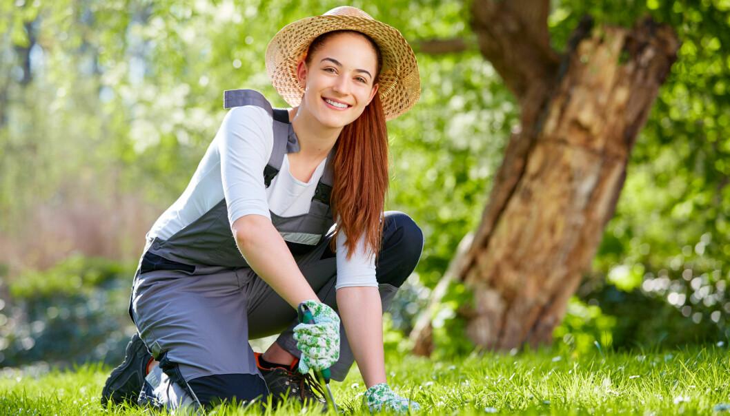 En glad kvinna rensar ogräs i sin gräsmatta.