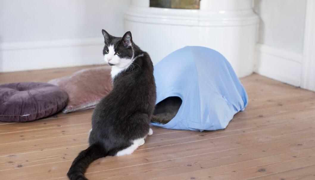 En katt som ser sugen ut på att hoppa in i sitt hemmagjorda kattält.