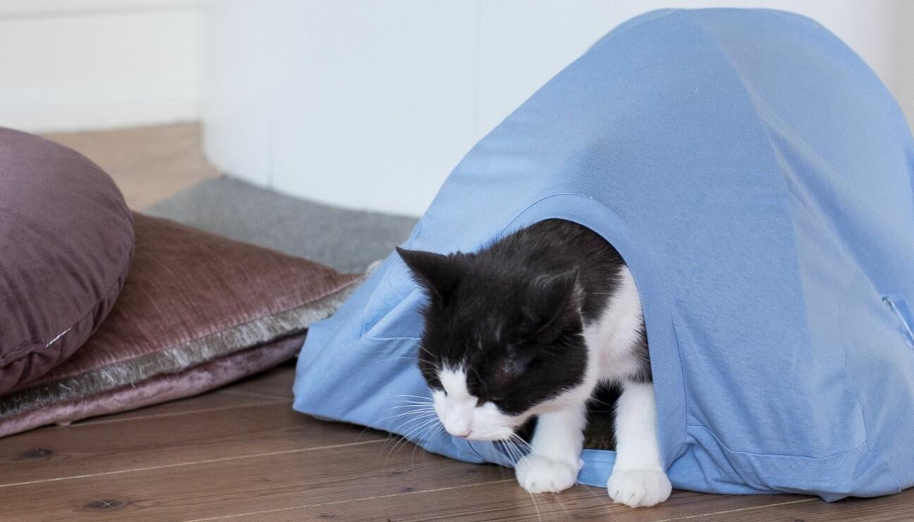 En katt som tittar ut ur sitt kattält som husse eller matte gjort på egen hand med vår enkla DIY-guide.