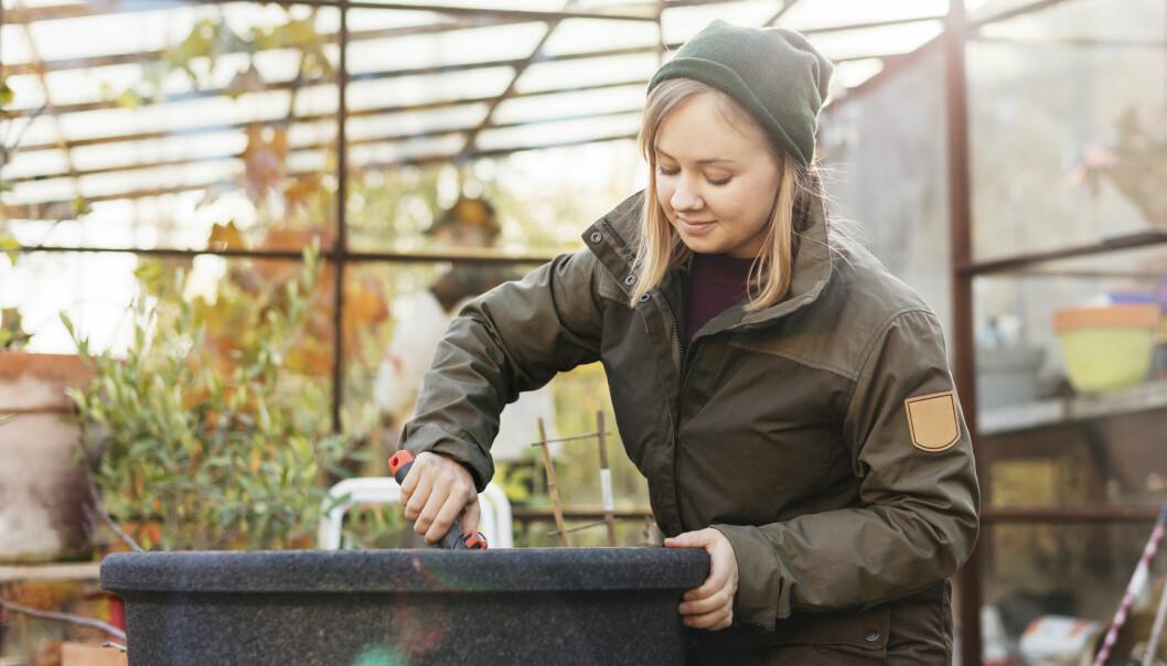 En kvinna gräver i en kruka i ett växthus.