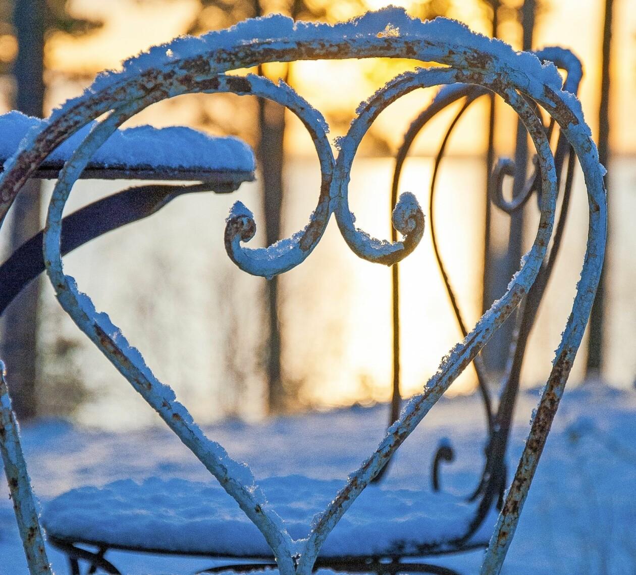 En snötäckt stol i solnedgången i vinterträdgården.