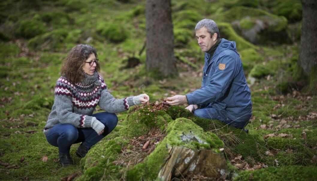 Josefin och Jan kopplar av i skogen