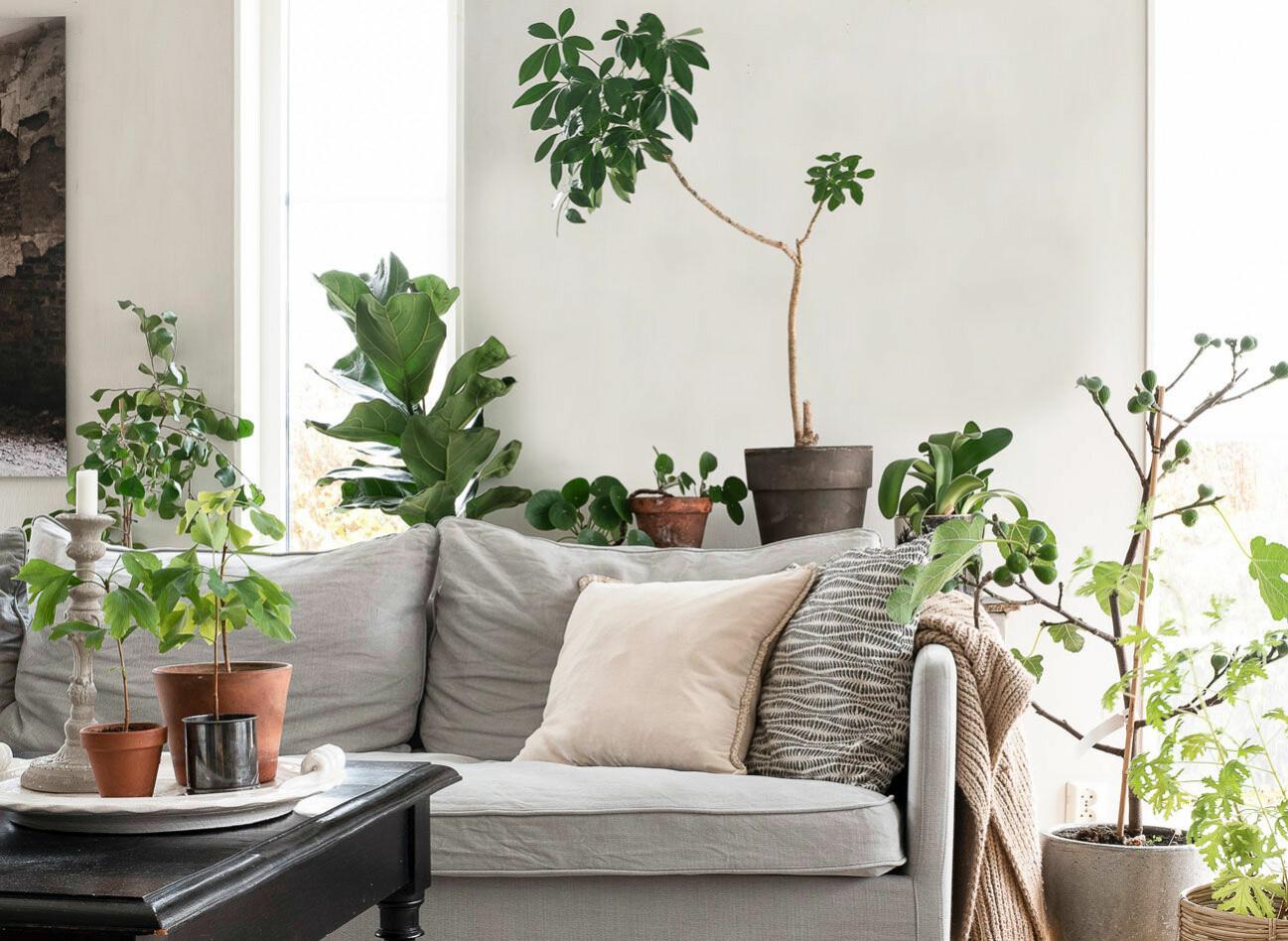 Ett hem med sköna gröna växter – som ger en mysig stämning.