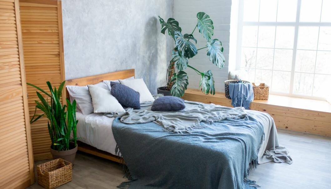 Ett sovrum med stora gröna växter i.