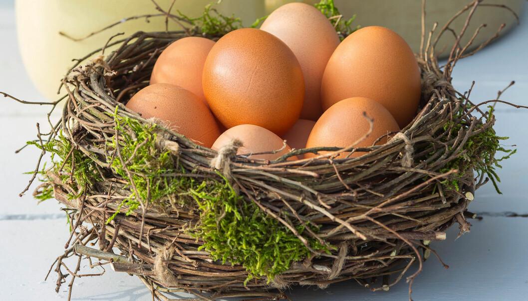 Ägg i fågelbo