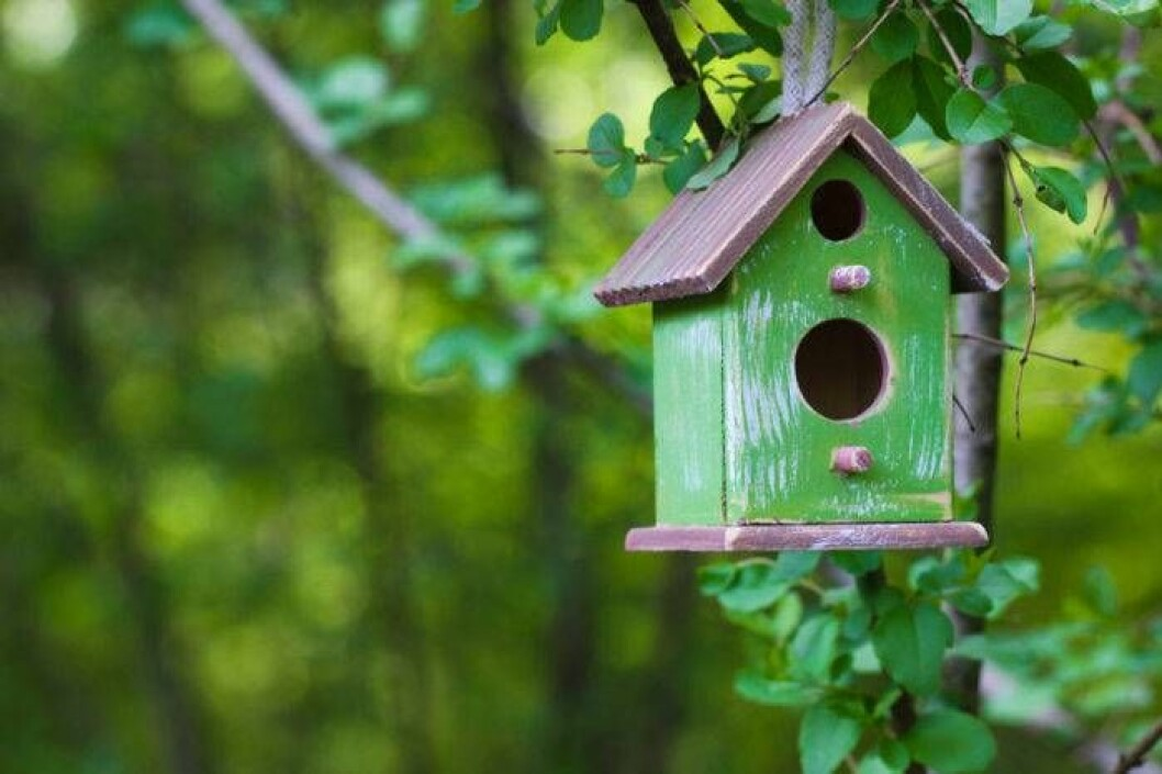 Placera inte fågelholken i söderläge, varnar forskarna.