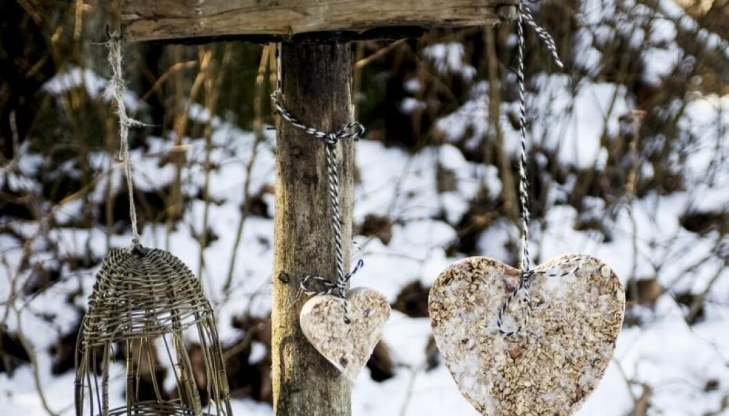 Så här gör du en fin matstation med hemmalagad mat till småfåglarna i trädgården.