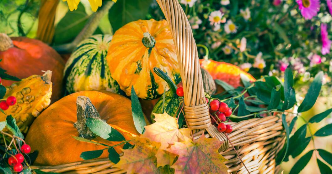 Korg fylld med höstlöv, blommor och färgglada pumpor.