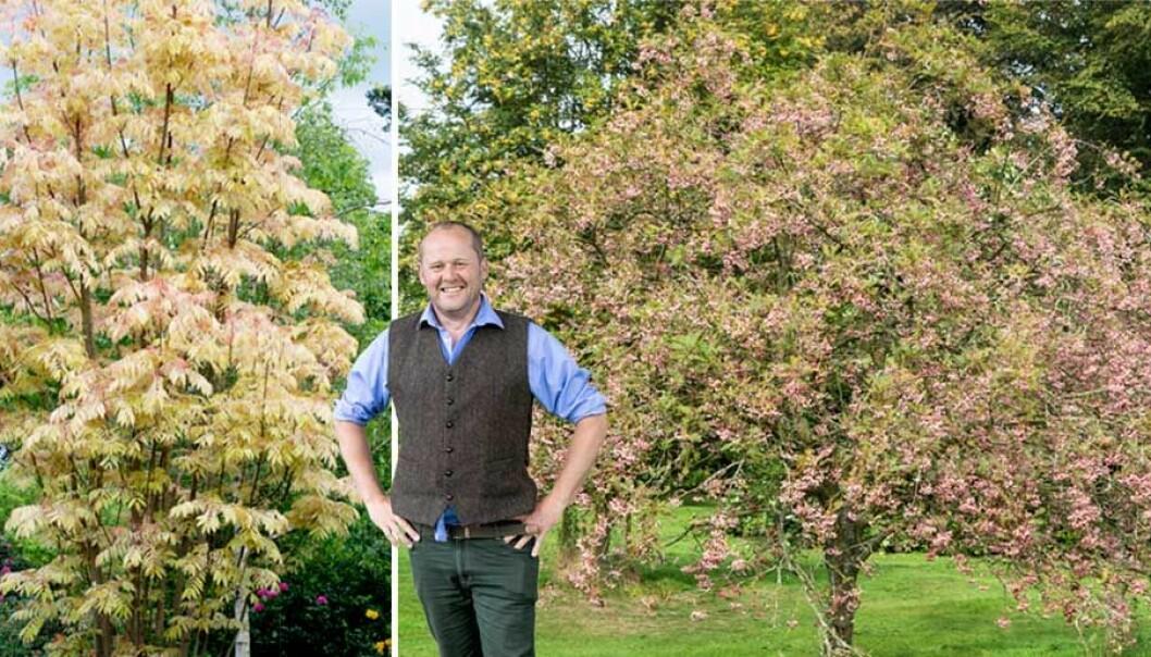 John Taylor framför några av sina favoritträd.