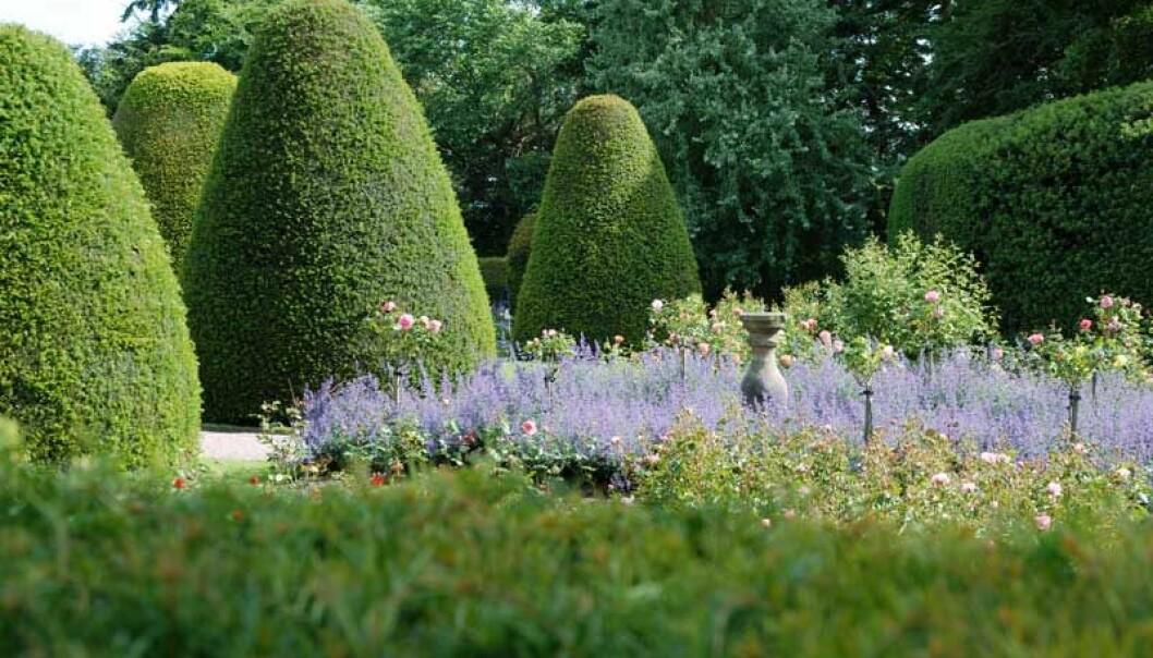 Upprepade former förstärker intrycket och blir pampigt. På Chirk Castle i Wales blir de gigantiska rundade konerna en häftig kontrast till luftiga planteringar med rosor och nepeta.