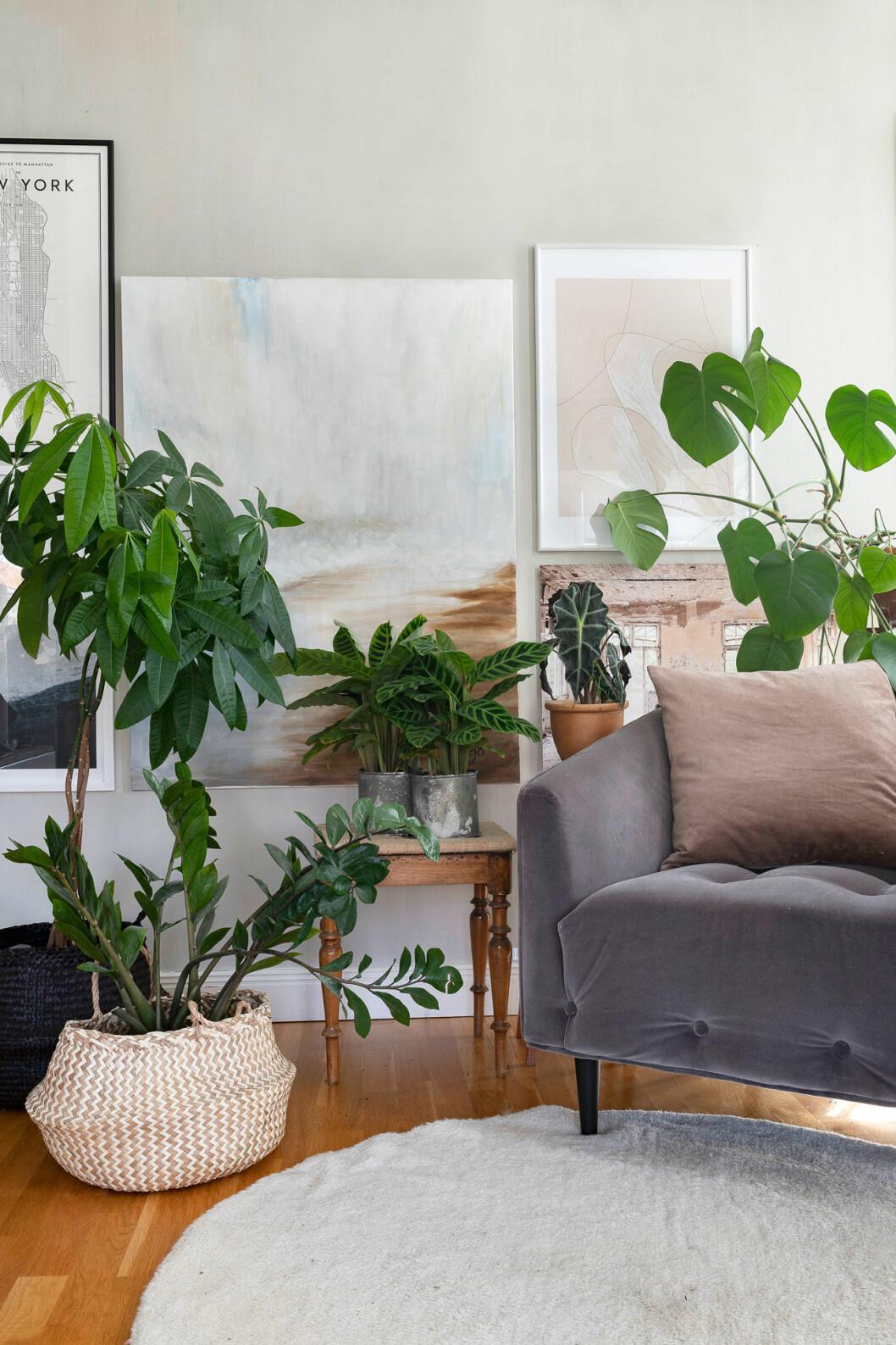 Skapa många gröna hörn i hemmet med hjälp av gröna växter. Garderobsblomma, strandkastanj, strimblad, amazonsköld och monstera bjuder alla på dekorativa blad. Garderobsblomma och även strimblad trivs bra även i rummet mörkaste delar.