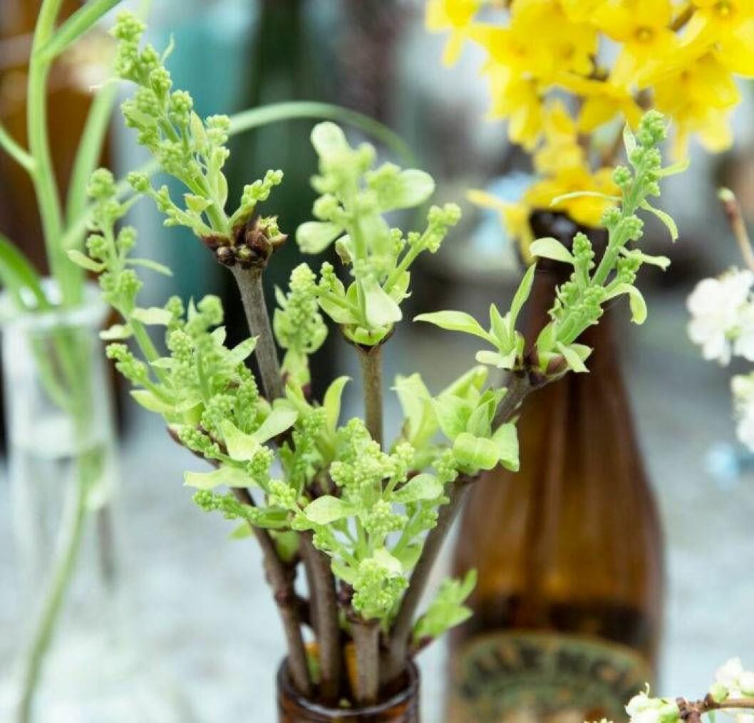 genvag-till-varen-driv-fram-kvistar-till-ljuvlig-blom-och-gronska