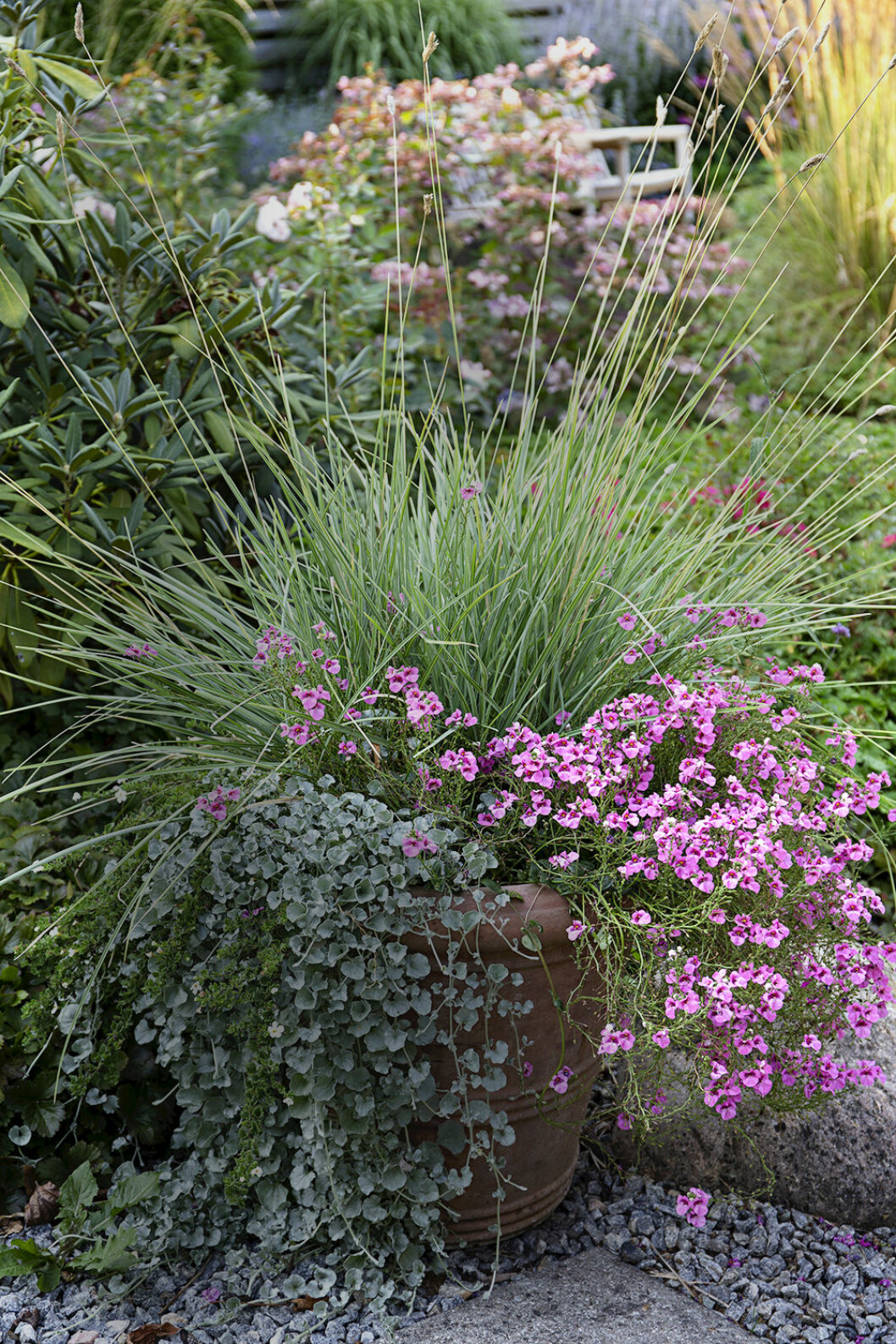 Gräs i kruka är en hit! I krukan står vårälväxing, Sesleria nitida, tvillingsporre, Diascia, och silvernjurvinda, Dichondra, 'Silver Falls'.