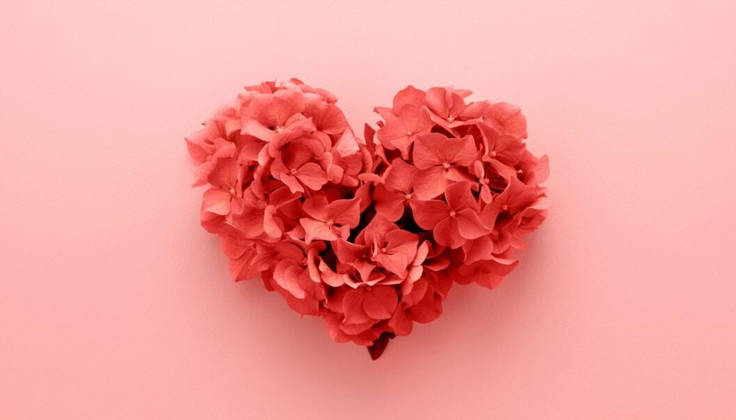 Rosa hjärta på rosa bakgrund
