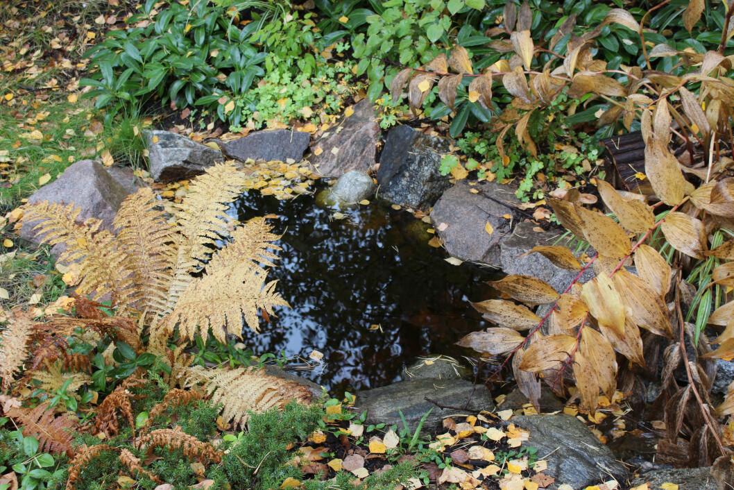 Höstlöv samsas med vattendetaljer i Årets trädgård 2020.