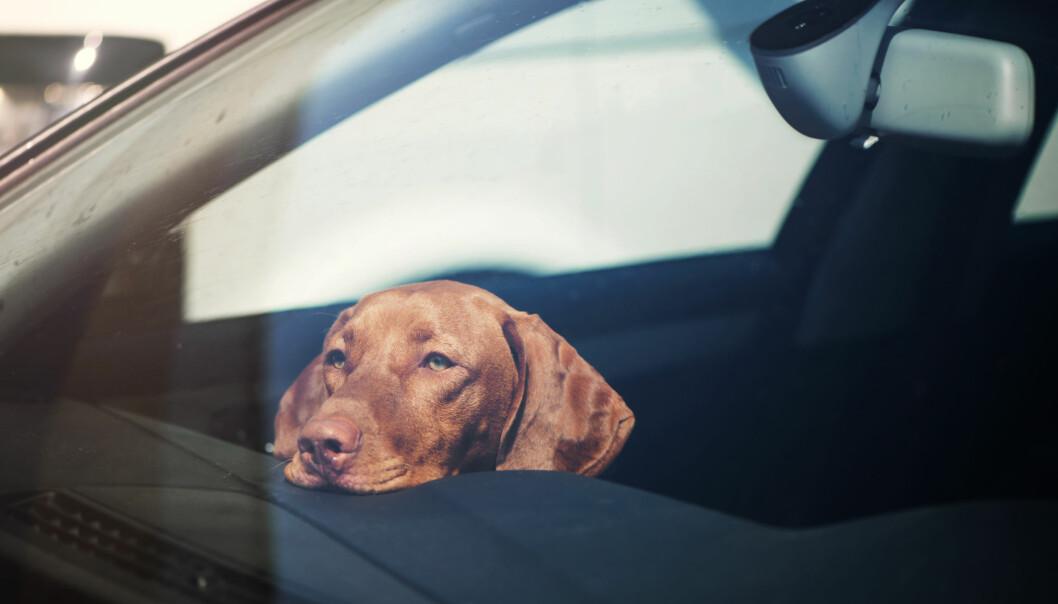 Hund övergiven i bil.