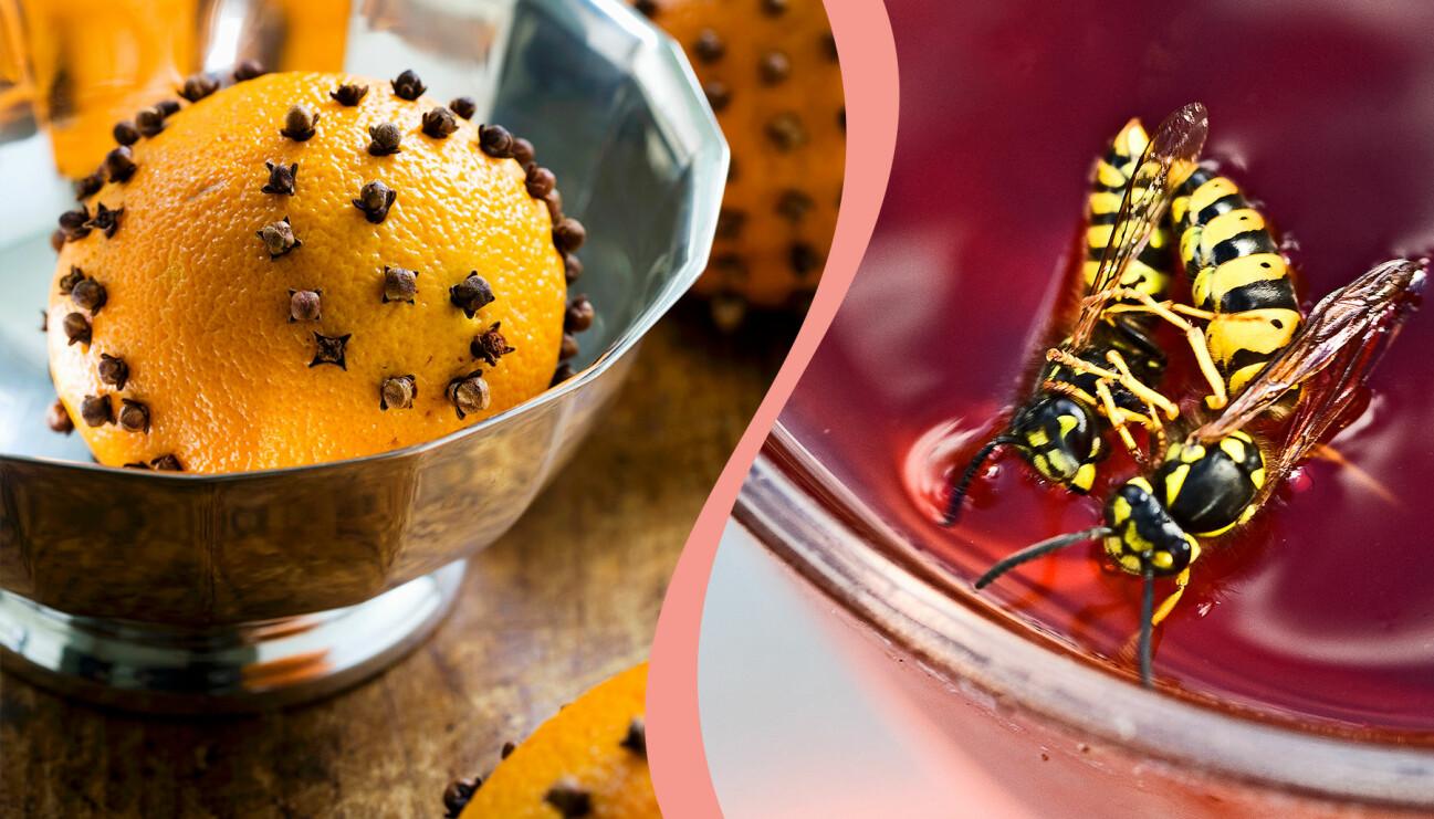 Apelsin med kryddnejlika och två getingar i ett saftglas
