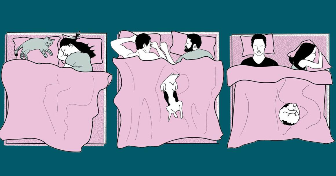 Illustration av par som sover med husdjur i sängen