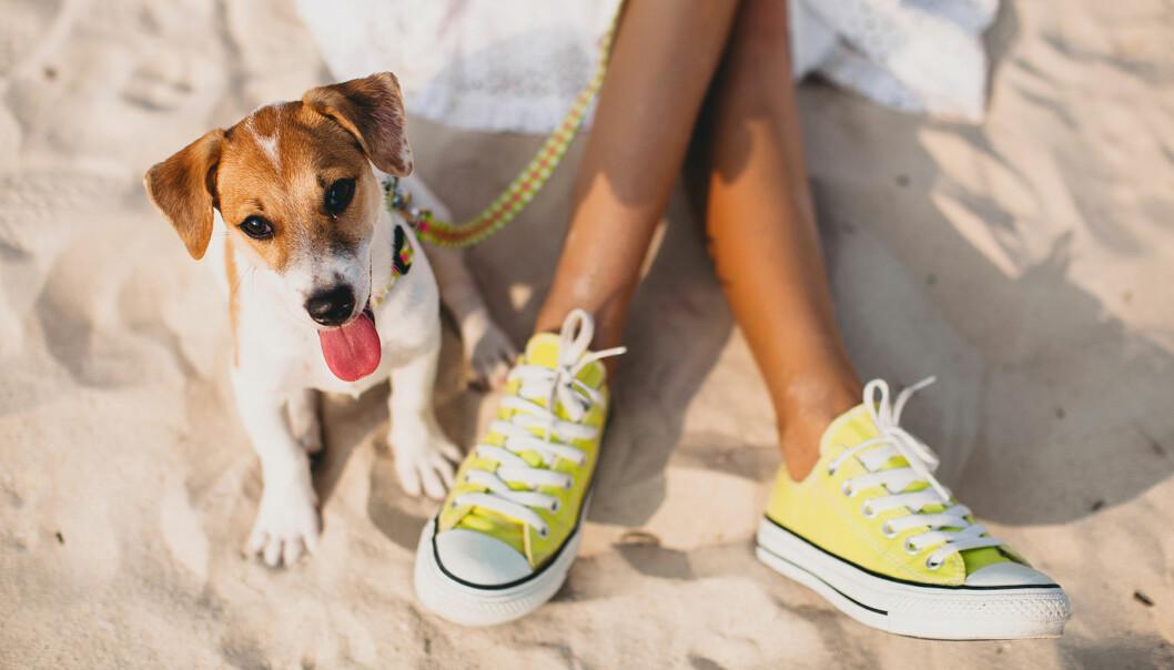 bästa skorna för fötterna