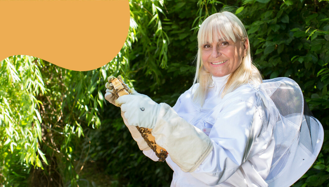 Stina Hedlund i biodlardräkt granskar ram från bikupan