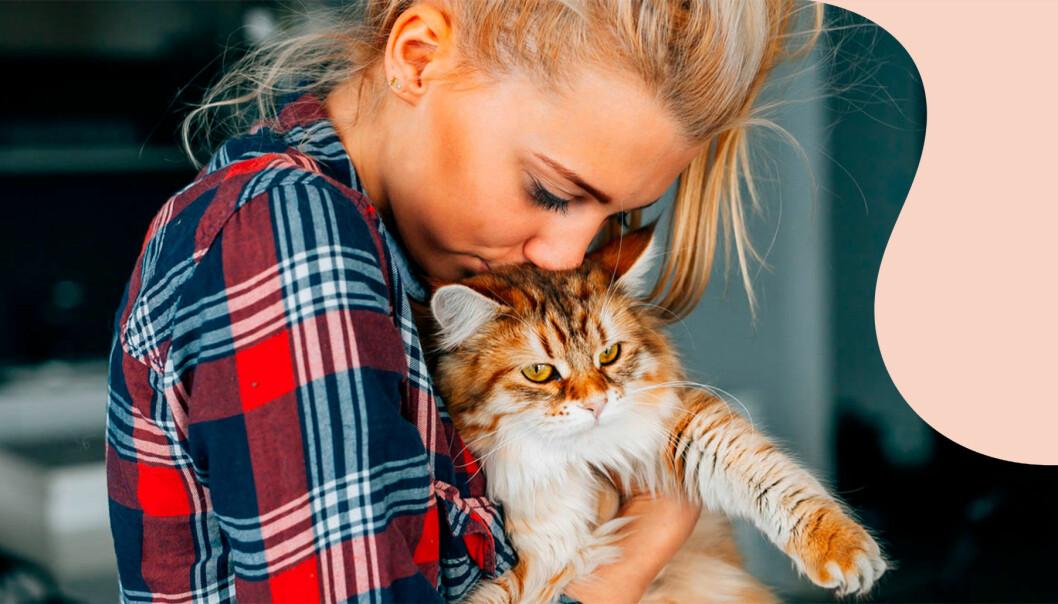 Nu finns ett vaccin för kattallergiker så att även de kan njuta av katters sällskap.
