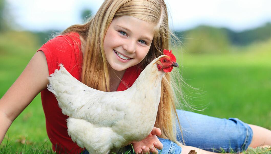 Flicka med höna på gräsmatta