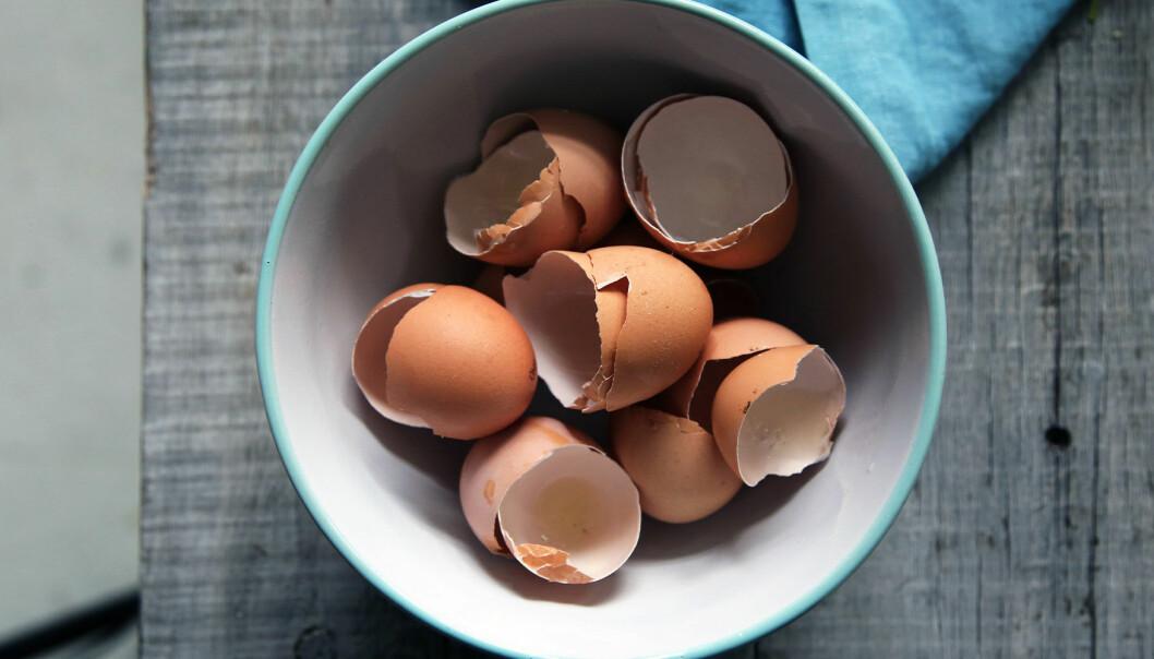 Äggskal redo att mixas med vatten för att vässa din mixer
