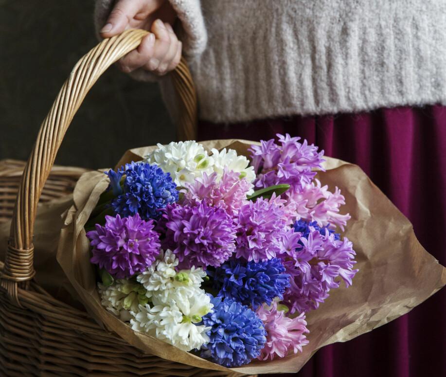 Korg med hyacinter.
