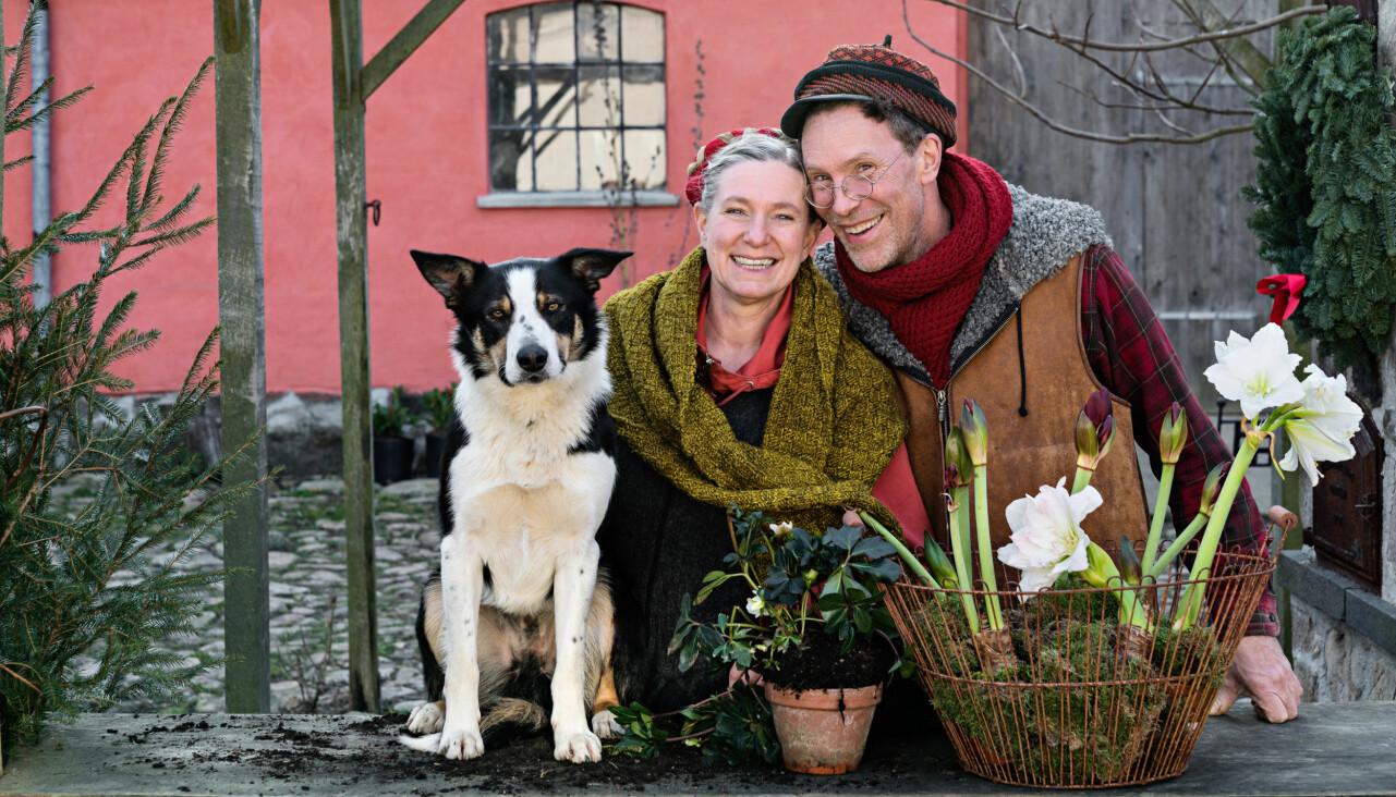 Gustav och Marie Mandelmann tillsammans med hunden Saffran på julpyntade gården Djupadal i Skåne.